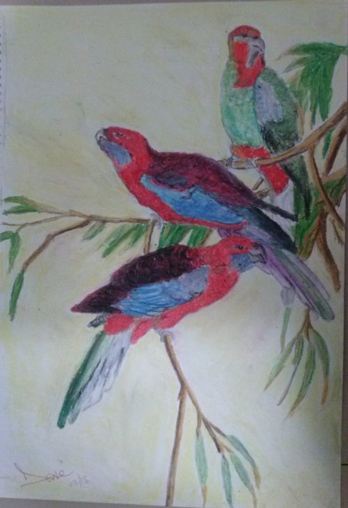 The Crimson Rosellas