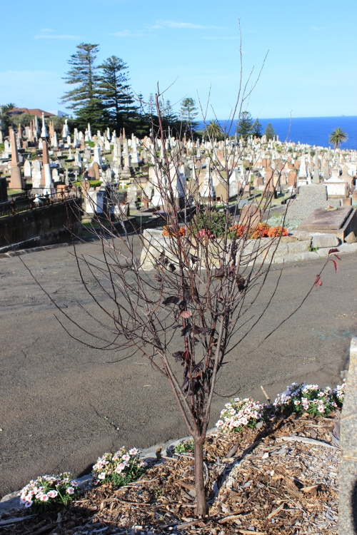 some pics taken at Waverly Cemetry
