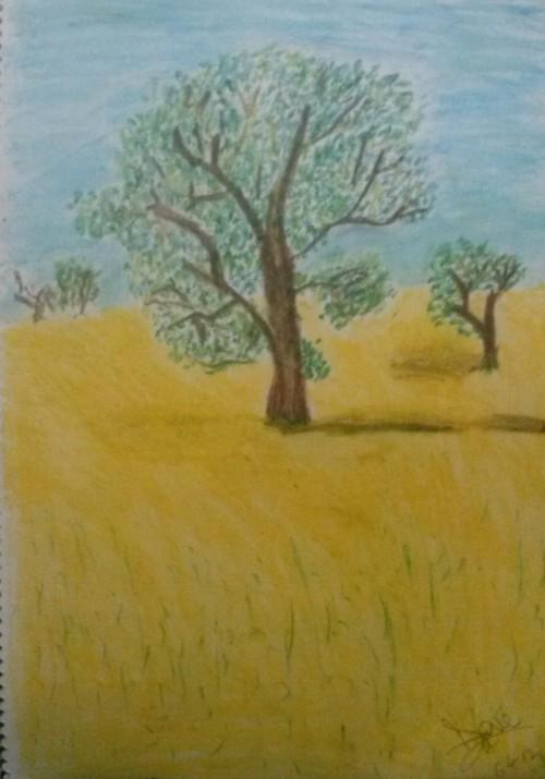 tree on canola field