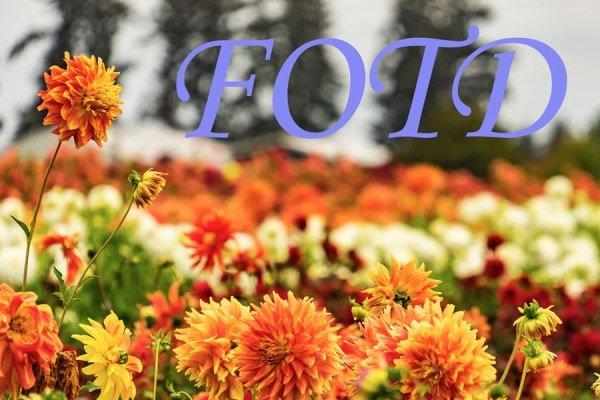 fotd-banner-11853684195.jpg